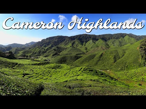 This is Malaysia? Cameron Highlands | Full time travel family