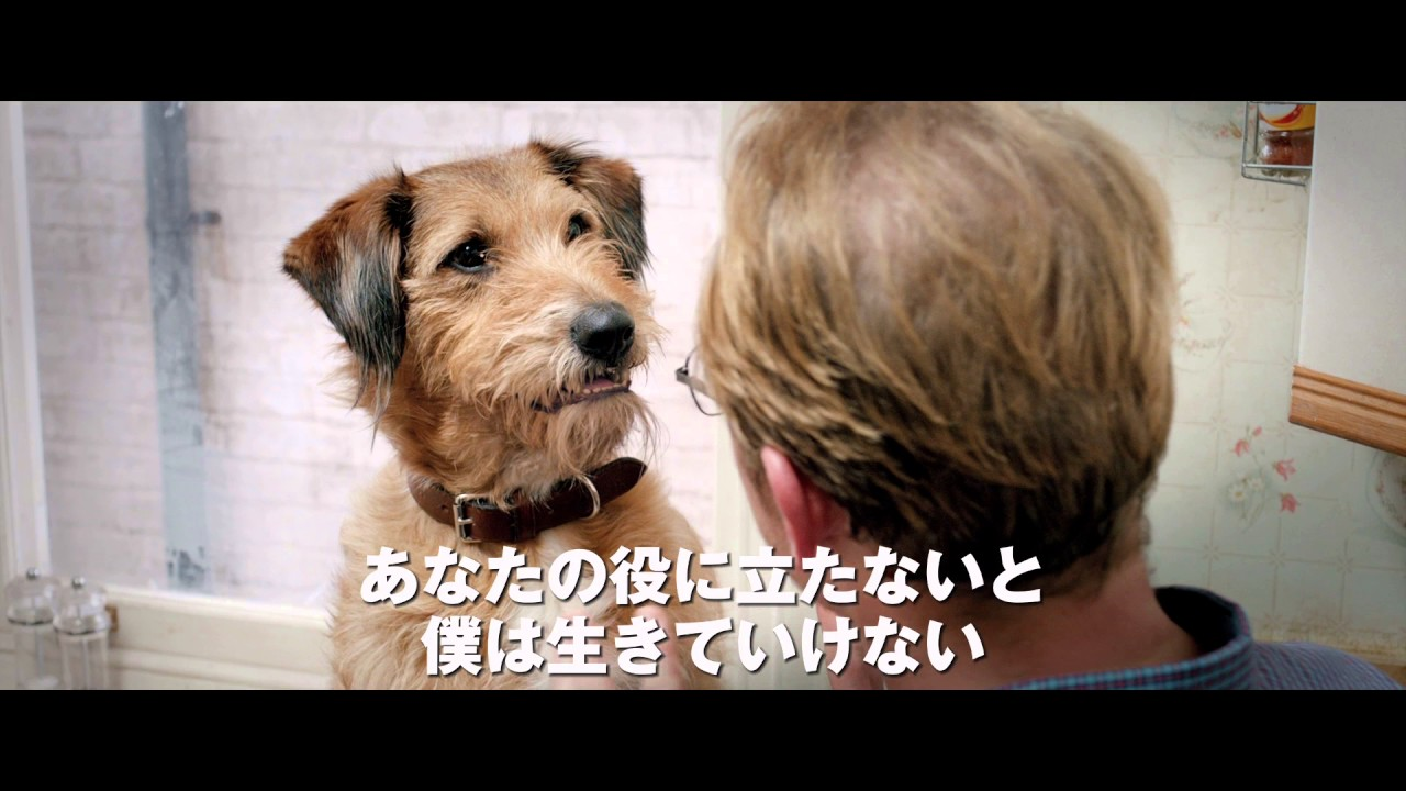 画像: 映画『ミラクル・ニール!』予告 youtu.be