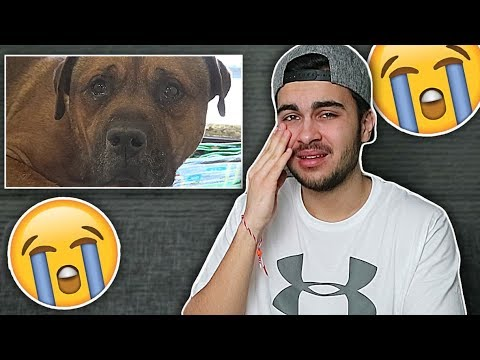 ! (Try not to cry challenge )