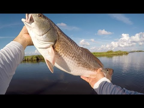 Ridiculous, ridiculous, ridiculous redfish action right now