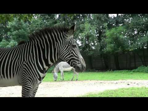 Dvur Kralove - Safari off road