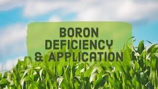 Boron Deficiency & Application
