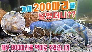 200 crayfish were given 800 shrimp