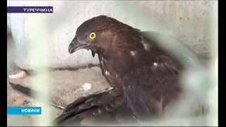 """У Турецькому зоопарку відкрили """"Пташиний шпиталь"""""""