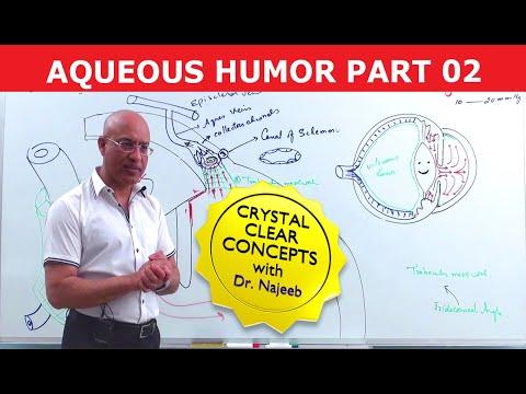 Aqueous Humor - Production, Circulation & Drainage Part 2/2