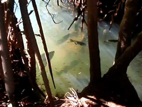 Fishing Nivarna Cape York Queensland