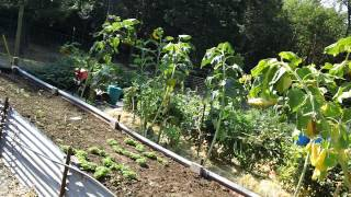 ShaBog Garden 9 5 2012