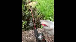 shark-puppet-goes-fishing