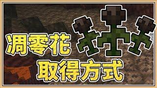 【Minecraft】為花獻上心臟 ❤「凋零花」取得方式大公開!