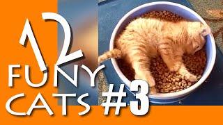3 Funny cats videos 2020 Смешные Коты и Кошки