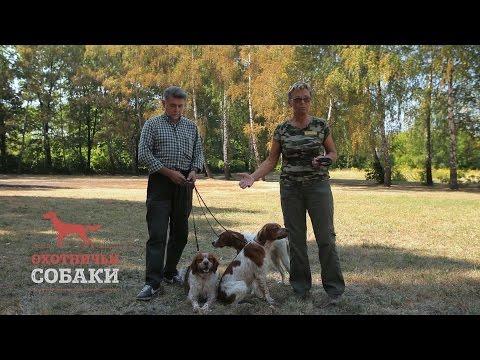 Охотничьи собаки. 1 серия. Эпаньол бретон