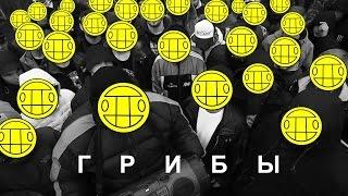 Грибы-Между нами тает лед(ПРЕМЬЕРА КЛИПА 2017)HD 1080