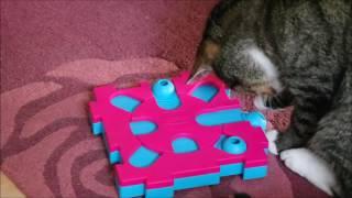 Testbericht: Cat MixMax Puzzle B
