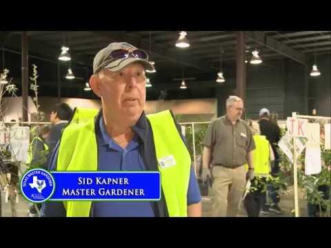 Harris County Master Gardeners Tree And Tomato Sale 2019 Youtube