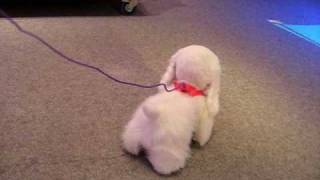 Hasbro's FurReal Friends - GoGo, My Walking Pup - Video by Nancy Johnson Horn