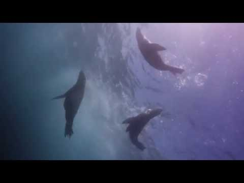 Seal Diving So Thrilling