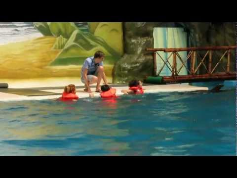 swimming with the dolphins dubai dolphinarium