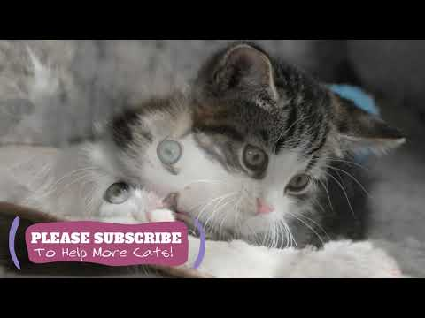 Soothing Music for Cats! 2 Hours Watch Your Cat Fall Asleep Before Your Eyes ☯LCZ81