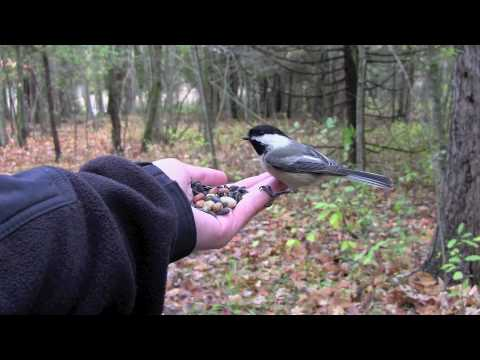 Tim Palmer - Hand Feeding Wild Birds