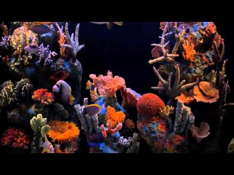 HD Moods Aquarium Title2