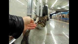 Cute Cat Videos.😍 All Very Cute. (Cute cats living on the street)
