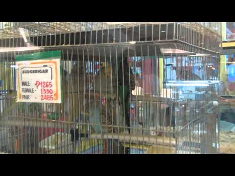 BioResearch in SM MegaMall (Pet Store) Part 3/3