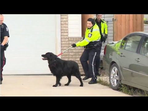 Bizarre attack: Takedown of two violent dogs in Edmonton