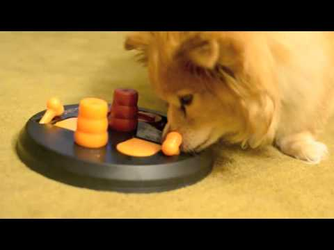Bo Playing with the Dog Activity Flip Board by Trixie