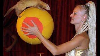 Шоу хорьков на детский праздник в Москве