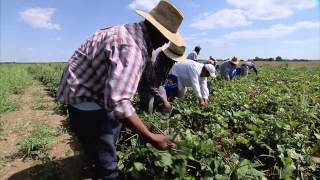 Arkansas Produce Farm - America's Heartland