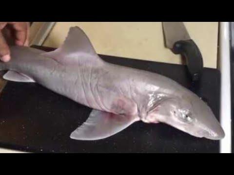 سمك القرش تنظيفه وسلخه وتقطيعه Clean Unskin Shark Fish للشيف ايمن حسن Youtube