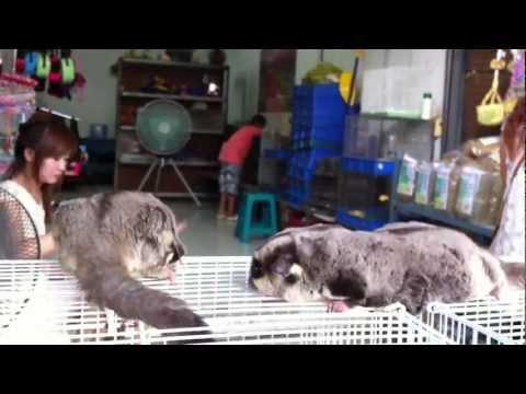 Bangkok Exotic Pets at Chatuchak Weekend Market (JJ Market)