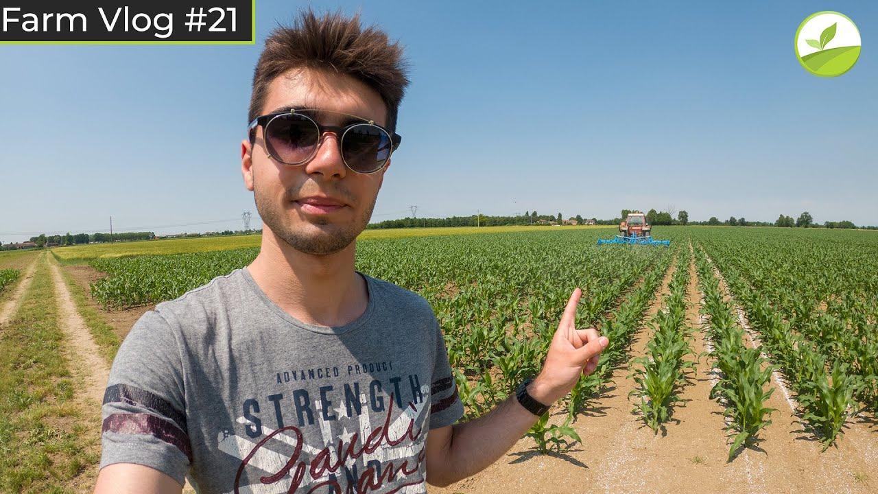 Farm Vlog #21 - SARCHIATURA E CONCIMAZIONE INTERFILARE DEL MAIS! 🌽