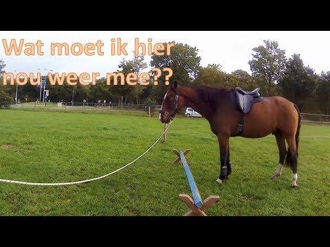 Vlog 31# ZADEL VROLEX en TRAINEN met BALKJE   Horse Around