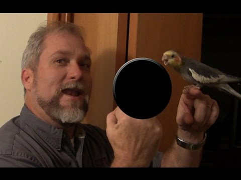 Man with Huge Middle Finger Gives You the Bird - Megabird