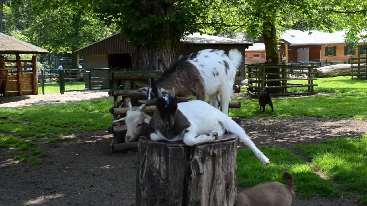 Köln Lindenthal Tierpark