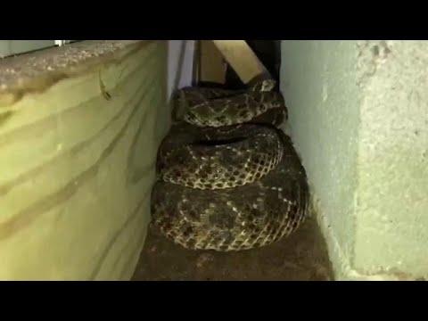 شاهد: أفاع مجلجلة تغزو منزلا في تكساس  - نشر قبل 54 دقيقة