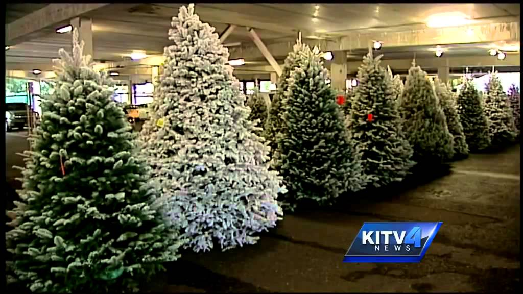 mans passion to flock christmas trees