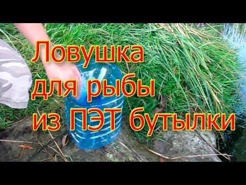 Ловушка для рыбы из пластиковой бутылки