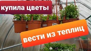 Вести из теплиц/ Новинки для сада/Обзор цветов и рассады