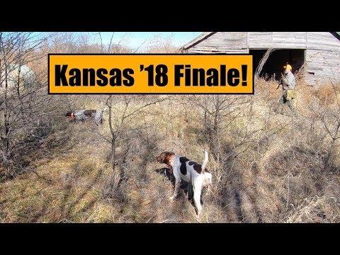 Kansas Quail Hunt 2018 Part 3-The Finale!