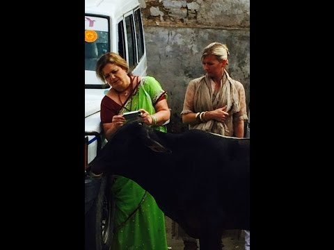 Crazy Sick Day - Jaipur to Pushkar to Udaipur - India Travel Vlog #CindyEyler Feb 25, 2014
