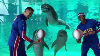 Dolphins, Sea Lions, and Harlem Globetrotters