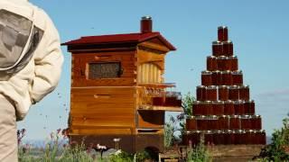 Honey pyramid timelapse Flow Hive video