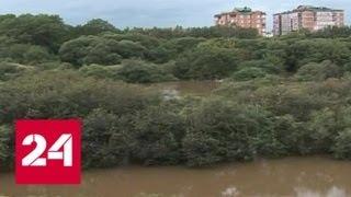 """""""Погода 24"""": тайфун """"Яги"""" несется к Приморью, как баба Яга - Россия 24"""