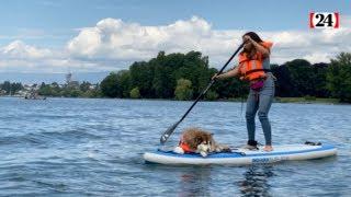 Des cours de «toutou paddle» pour pagayer avec son chien