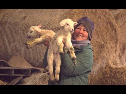 Life on the farm in a digital age | ITV News