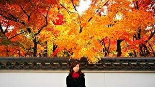 VLOG: Solo Travel to Osaka and Kyoto Japan Awesome Autumn