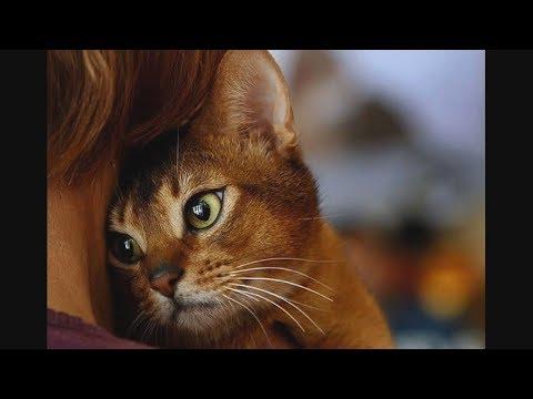 Как кошки показывают нам свою любовь. Признаки, по которым можно понять, что кот вас любит!