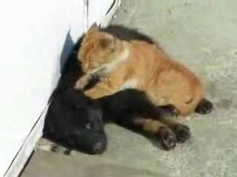 Hot jock massages & kisses his black gay friendKaynak: YouTube · Süre: 2 dakika49 saniye